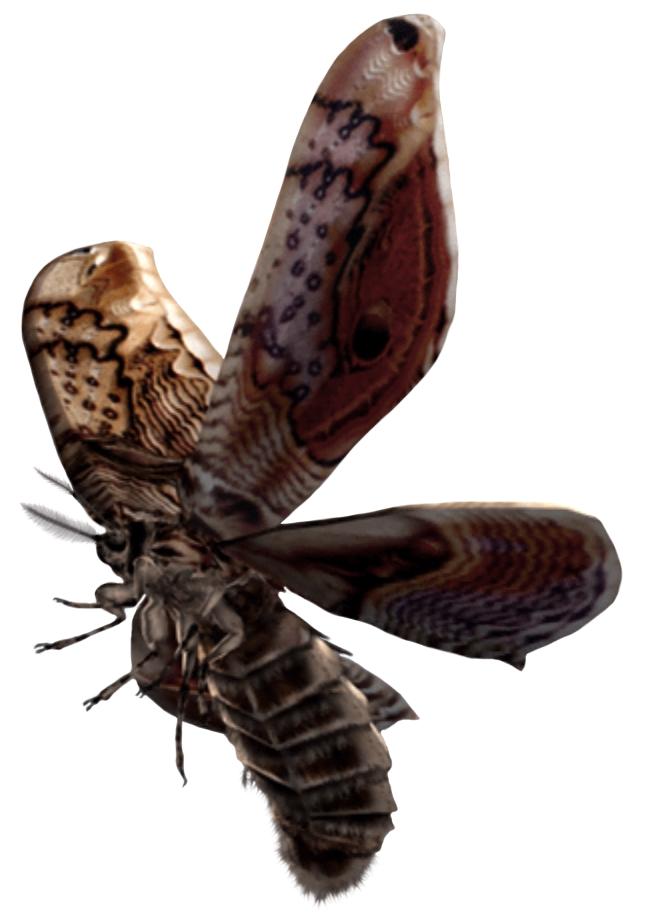 Archivo:Giant Moth.jpg