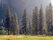 RaccoonForest.jpg