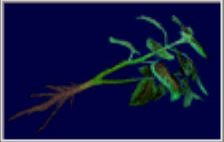 File:Green herb (RE3).png