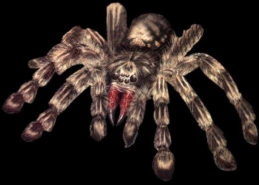 File:Web Spinner render.jpg