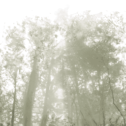 File:Flashback - Raccoon Forest extract 2.png