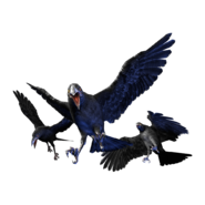 Cr crow