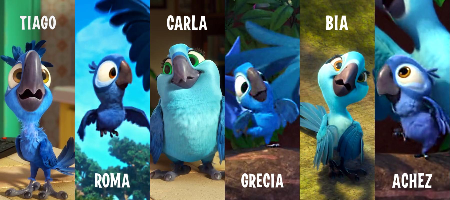 Blue macaws in rio - photo#9