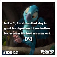 Rio-Wiki-100Days100Facts-097