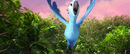 Discover the Forest with Rio 2 00 00 17 02 516