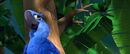 Blu Aviary