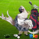 Golf With Nigel