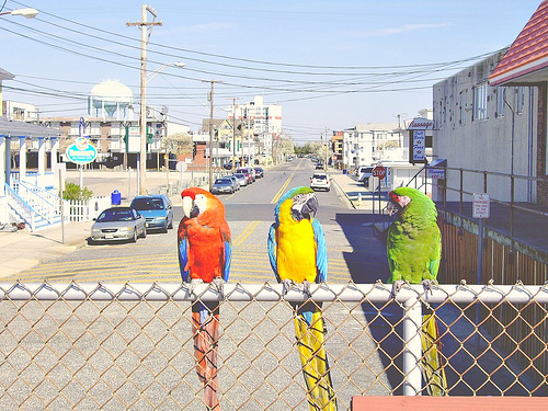 File:Three Birds on a Boardwalk.jpg