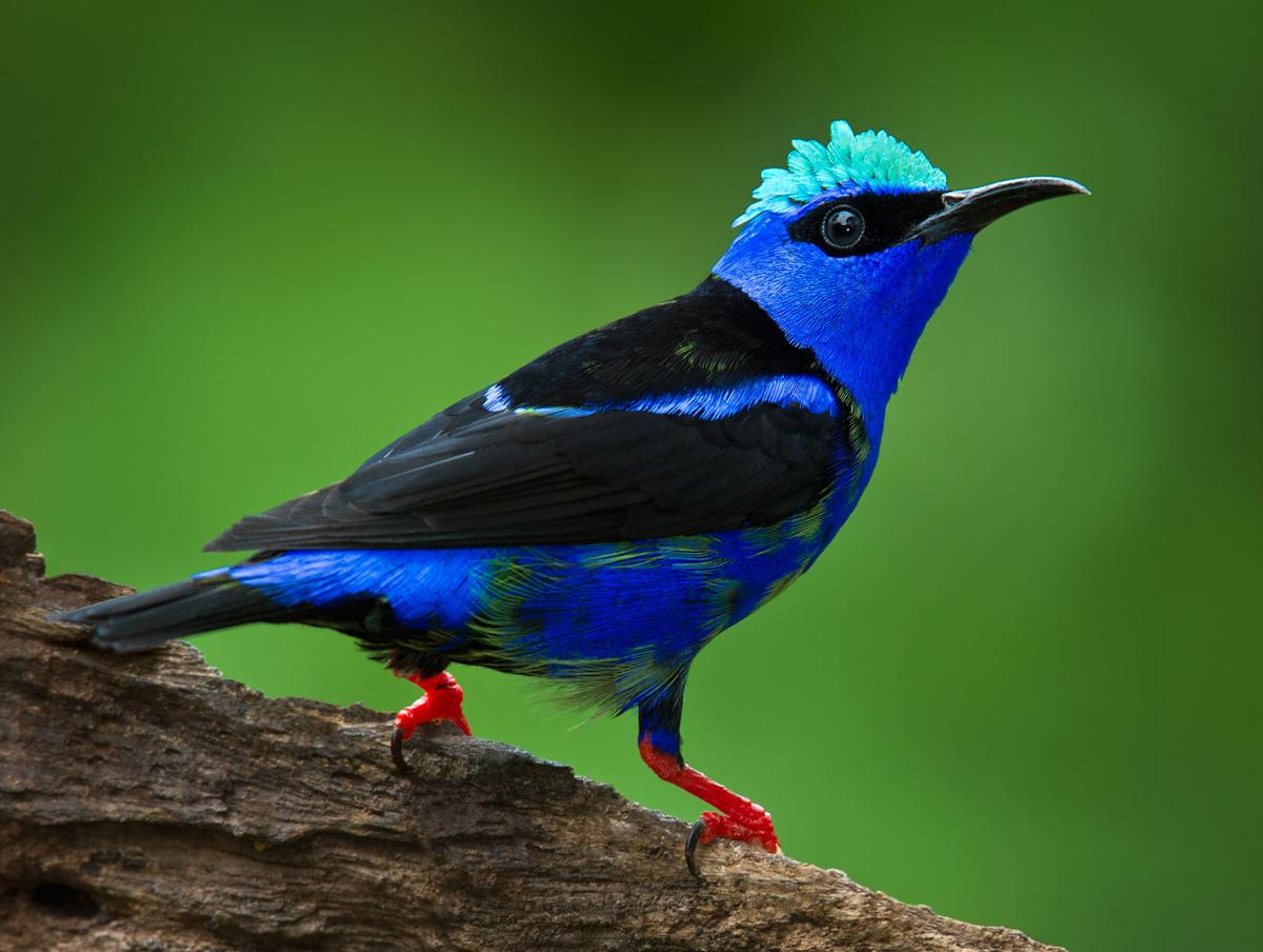 Image mainpage navmap thumb bird rio for Birdhouse types