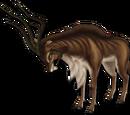 Gestreifte Gazelle