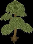 140px-Yew tree