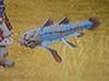 Sky fish