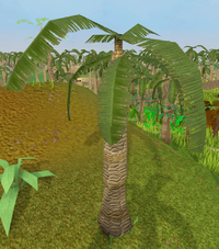 Leafy palm tree