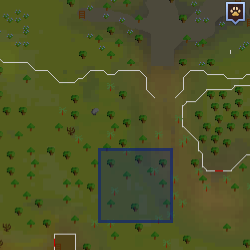 Scout (Tree Gnome Stronghold) location