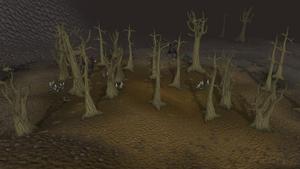 Wilderness old