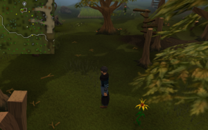 Compass clue Tree Gnome Stronghold north-west of entrance