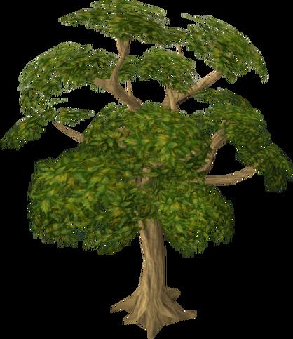 Plik:Mahogany tree.png