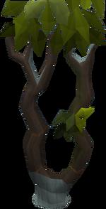 Thigat tree