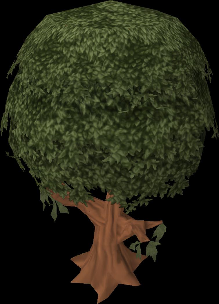 Cinnamon tree.png