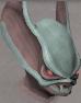 Darkmeyer blood trader chathead