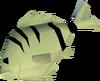 Raw cavefish detail