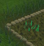 Snape grass1