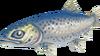 Trout (Aquarium)