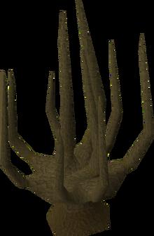 Achey tree old