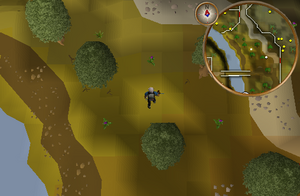 Compass clue Lumbridge west of cow pen