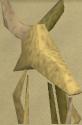 Boneguard chathead