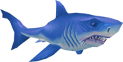 Great white shark (Aquarium)