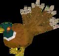 Pheasant4tail