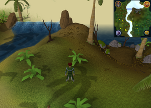 Compass clue Karamja east of Jade Vine Maze