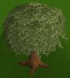 Nice tree built