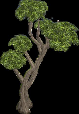 Plik:Eucalyptus Tree.png