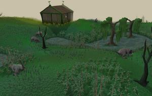 Lumbridge swamps old