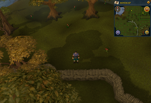 Compass clue Yanille south-west of Gnome maze