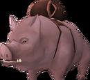 Pig (pet)