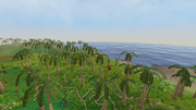 Kharazi Jungle