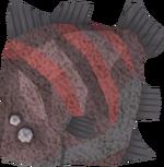 Giant flatfish detail