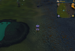Compass clue Wilderness north-west of Corporeal Beast lair entrance
