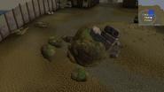 Earthquake rocks piscatoris