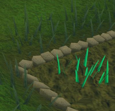 Snape grass2
