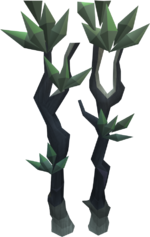Blood spindle tree