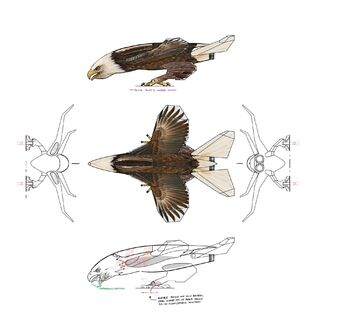 Screaming Eagle - Concept Art coloured all sides