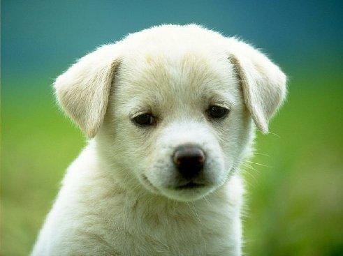 File:Pup2.jpg