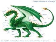 Dragon diagram