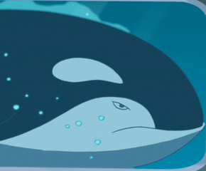 Becky the orca