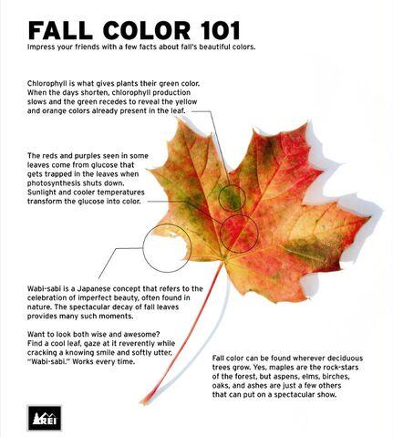 File:Fall Colors 101 REI.jpg