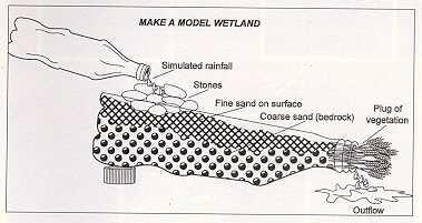 File:Wetland in a Bottle.jpg